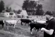 Жителя Новосибирска подозревают в расстреле коров в Республике Алтай