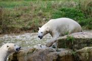 «Роснефть» начала экспедицию по исследованию краснокнижных животных Арктики