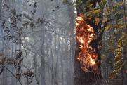 Формируя смыслы: проверки тюменского СК и лесные пожары на Среднем Урале