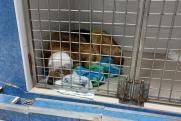 Пьяный житель Асбеста разрубил топором голову своей собаки