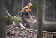 Экологический распил: зачем в регионах Поволжья собираются вырубить все тополя