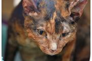 При пожаре в якутском селе сгорели домашние животные: «Картина страшная, до слез»