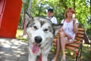 Владельцев опасных собак хотят заставить страховать ответственность