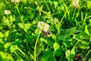 Массовую гибель пчел расследуют в Красноярском крае