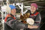 Россиян предупредили о повышении цен на курицу и яйца