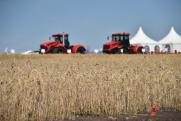 Как сильно ударит засуха по прикамским аграриям: «Рост цен и дефицит кормов»