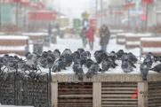 Трем уральским регионам угрожают заморозки