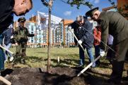 В новом районе Екатеринбурга заложили дубраву