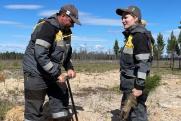 «Конданефть» высадила более 2 млн саженцев сосны