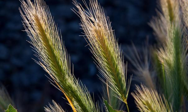 На27июня экспорт зерновых достиг 52 млн тонн— Минсельхоз Российской Федерации