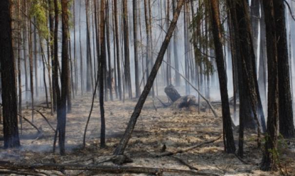 В Приангарье действует почти полсотни лесных пожаров