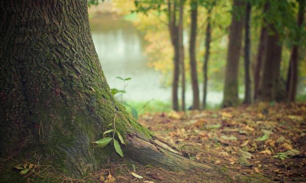 Восстановление зеленого участка должно быть осуществлено в течении года