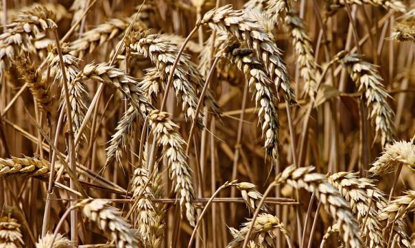 ВМинсельхозе опровергли слухи оросте цен нахлеб имуку