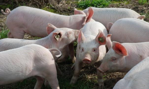 Незаконно добытую воду предприятие использовало для производственных нужд свинокомплекса.