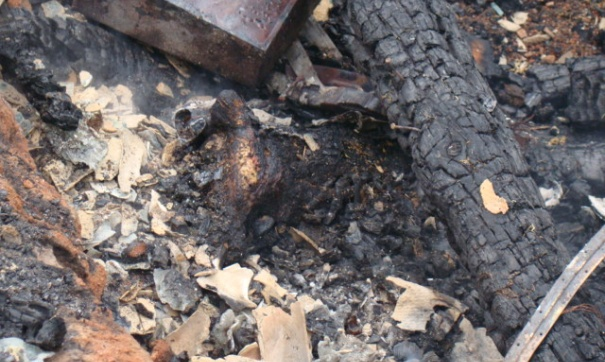 Крупнейший пожар в США уничтожил дом актера Джерарда Батлера