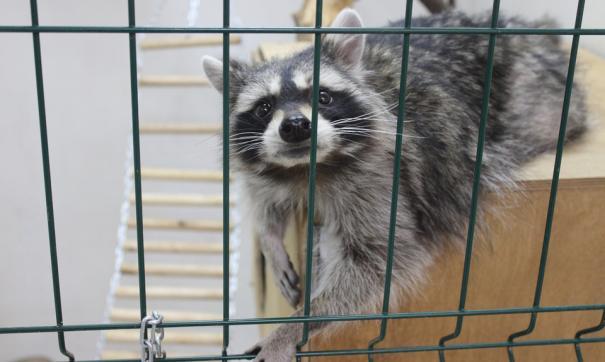 Передача зоопарка «Мишутка» инвестору приостановлена