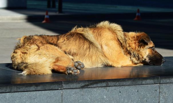 В Якутии полицейский застрелил собак ради спасения детей
