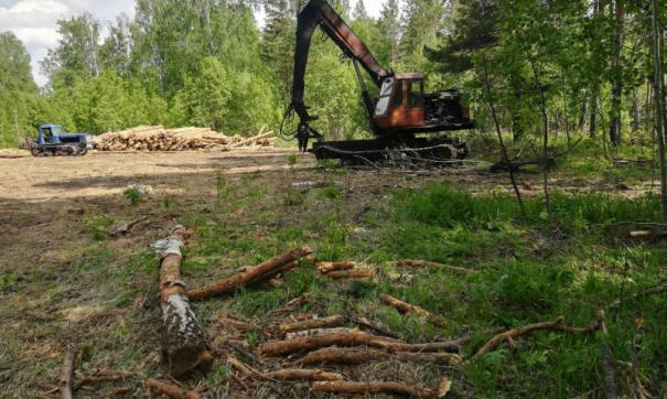Лесорубы нанесли ущерб территории на 15 миллионов рублей