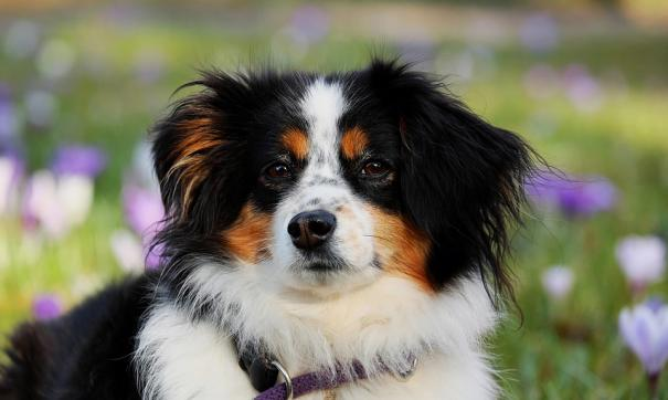 Ученые выяснили,  какие гены отвечают у собак за агрессию