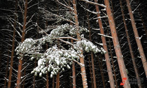 Сотрудники министерства обнаружили 1278 кубометров леса