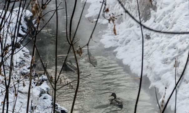 лог реки Тюменки