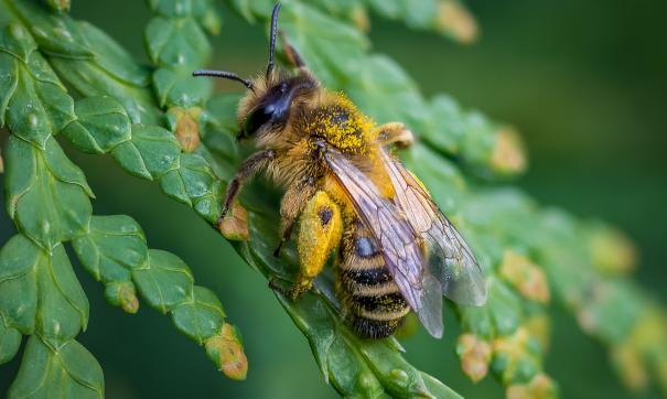 Украинский пчеловод улучшал вкус пчелиного меда каннабисом