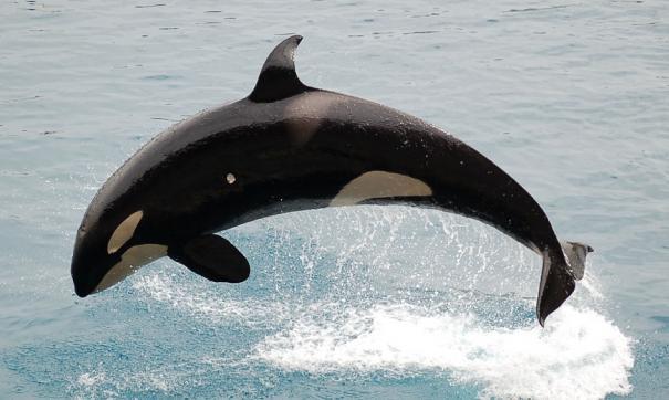 кто вместо России хочет поставлять животных в океанариумы Китая