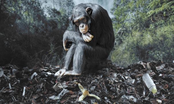 Полчища обезьян воруют еду, мобильные телефоны и пристают к посетителям исторического памятника.