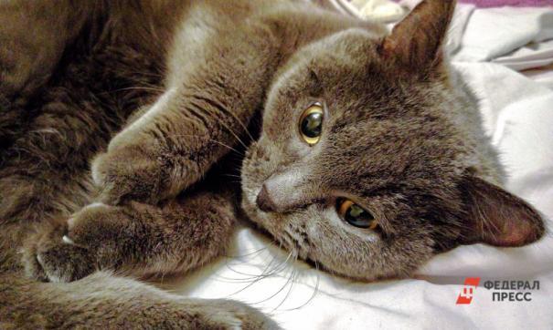 В Архангельской области осудили мужчину, который задушил и зарезал кота