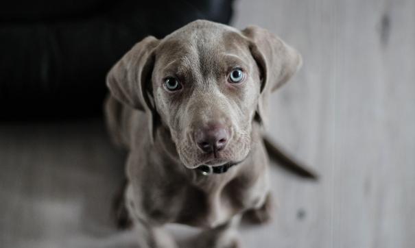 В Архангельске оправдали хозяйку собаки, укусившей ее бывшего супруга