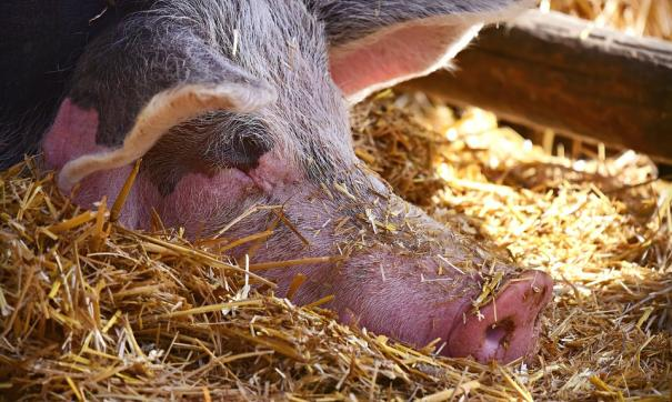 Свинина уже подешевела с начала года, сообщает источник