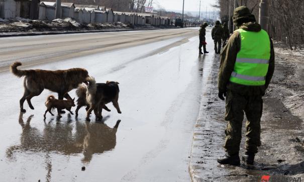 В Челябинске отловят более 3 тысяч бездомных животных