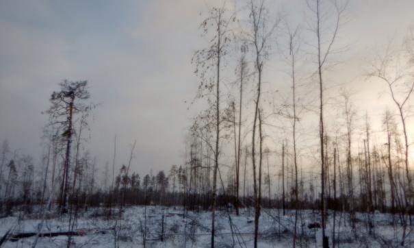 Рубка в государственном природном заказнике «Туколонь»