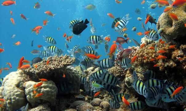 В прошлом подобные коралловые рифы были распространены в Средиземном море, но вымерли