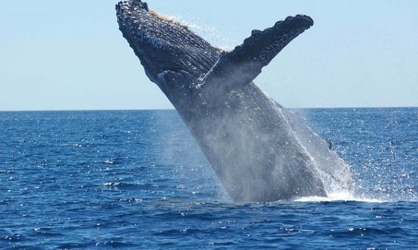 В Японии 87 человек пострадали при столкновении парома с китом