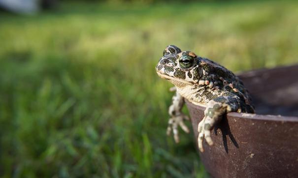 Популярный ведущий запаниковал, обнаружив жабу в унитазе
