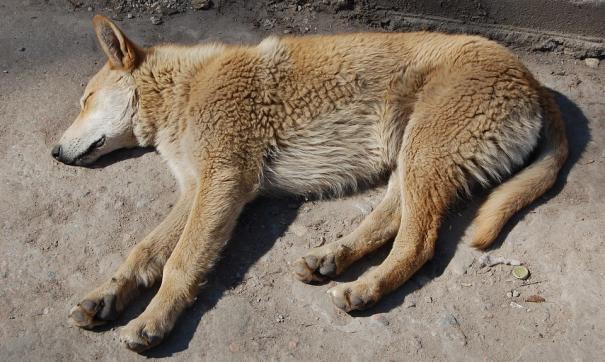 Неизвестные расстреляли бездомного пса в Хабаровском крае