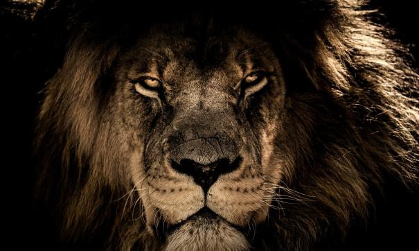 Скандальное расследование по деятельности всемирного фонда спасения дикой природы (WWF) провело издание BuzzFeed.