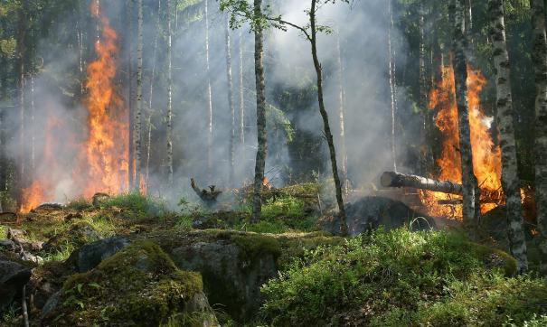 ГУ МЧС по Москве сообщает, что пожар в природном парке Серебряный бор ликвидирован
