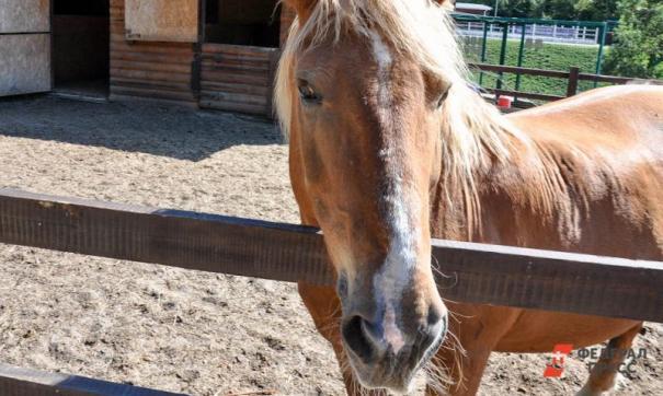 Фермеры воровали сено для лошадей.