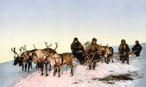 Оленеводством занимаются коренные малочисленные народы Севера
