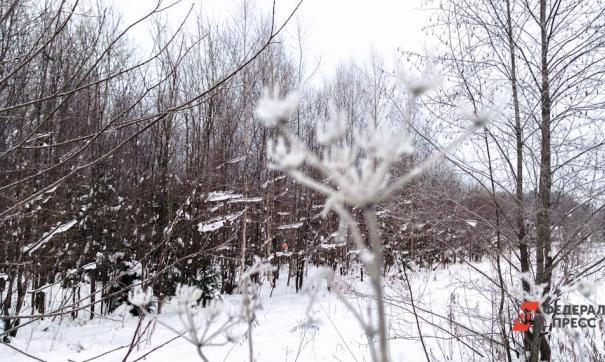 Лес и часть объектов Академгородка перейдут в федеральную собственность