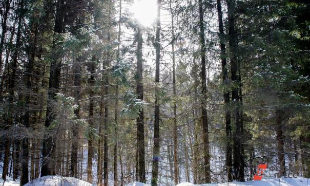 Преступники незаконно заготовили свыше 1700 кубометров древесины