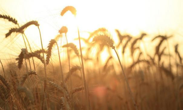 Депутаты заксобрания просят применить новые условия для получения господдержки аграриям Новосибирской области