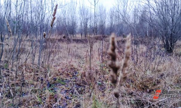 На нескольких территориях края пожароопасный сезон начался еще в конце марта