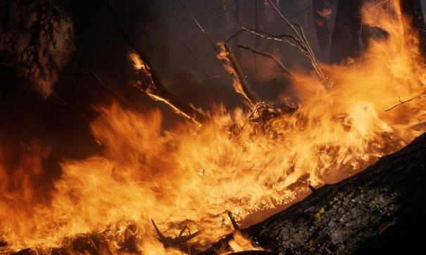 Пожар начался в 10-ти километрах от места гибели животных