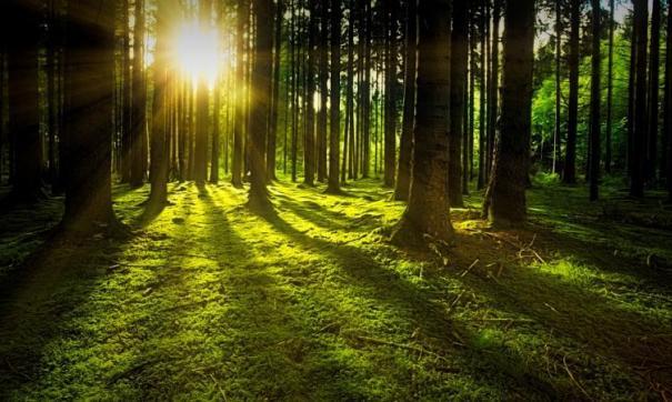 Власти не смогли найти подрядчика на восстановление леса.