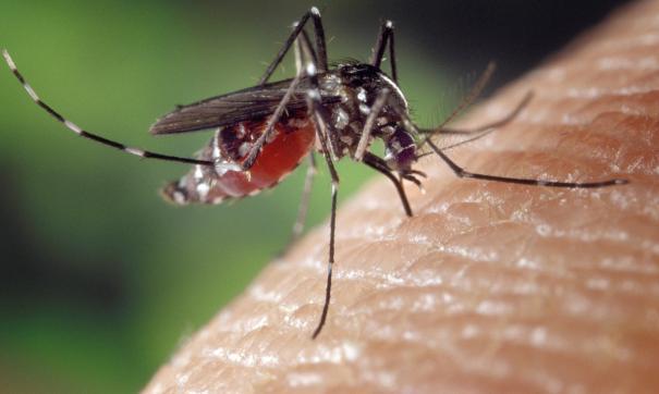 Тропические болезни переносят на север комары, мигрирующие из-за глобального потепления