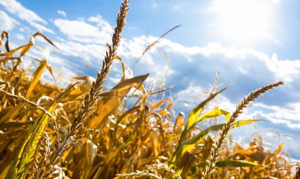 Эксперты ООН сообщают, что для предотвращения угрозы голода будут задействованы мировые запасы зерна.