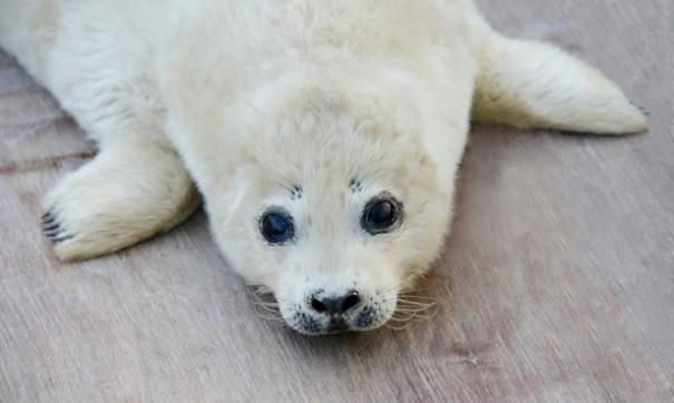 В Приморском океанариуме впервые в истории сумели вырастить детеныша ларги